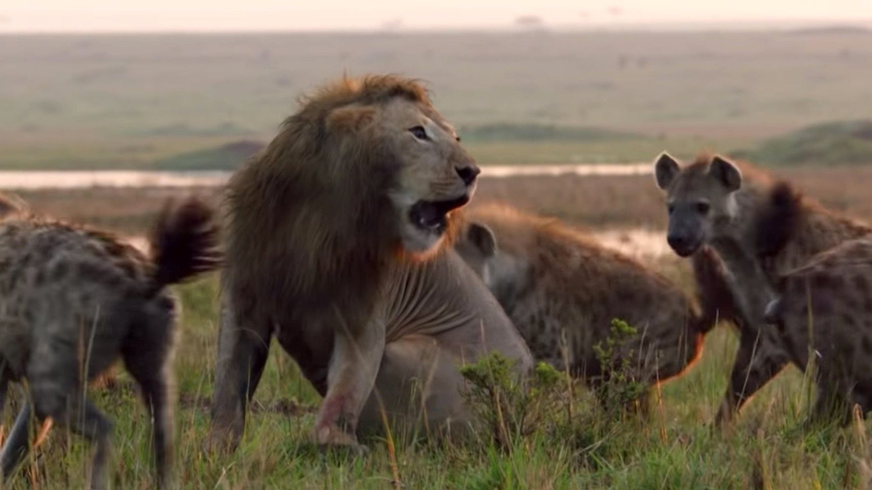 It Hits Different When the Lion Tells It's Own Story